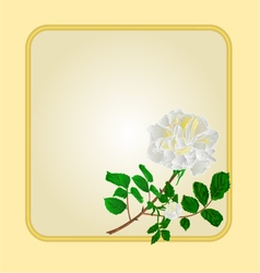 Golden frame with white rose greeting card vector image