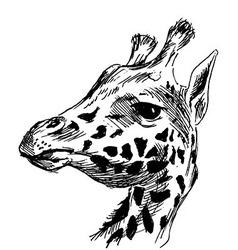 Hand sketch head giraffe vector