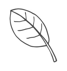 leaf doodle nature isolated vector image