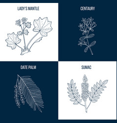 Set of four eatable and medicinal plants vector