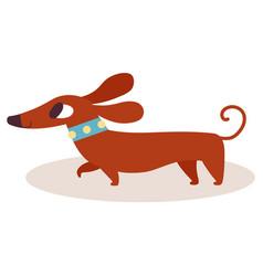 cute brown cartoon dachshund in a blue collar vector image