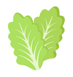 Lettuce flat icon vegetable and salad leaf vector