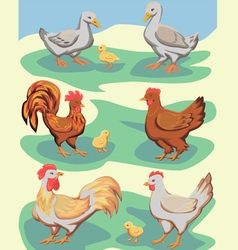 Chickens and ducks vector