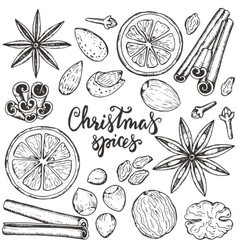 Collection christmas spices and citrus vector