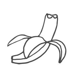 fruits banana doodle isolated vector image