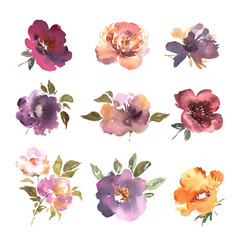watercolor flowers hand drawn colorful beautiful vector image