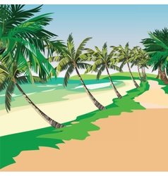 Summer Beach with Tropical Palm trees vector image vector image