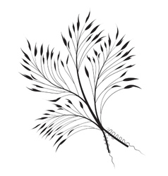 Decorative grass vector image