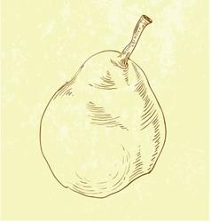 Pear fruit - vintage vector