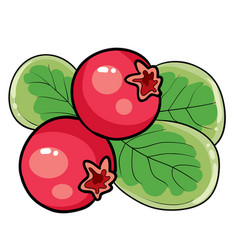 redberry on a bush with green leaves cartoon vector image