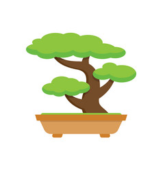 tree bonsai japanese tree vector image
