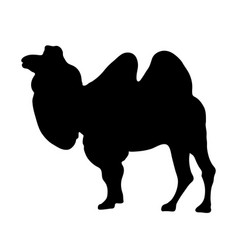 black silhouette of standing camel on white vector image