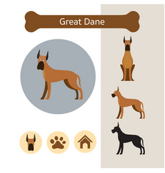 Great dane dog breed infographic vector