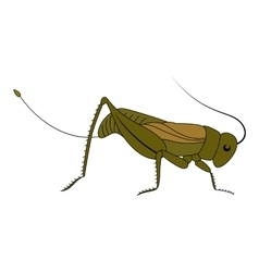 Insect Cute cartoon grasshopper vector image