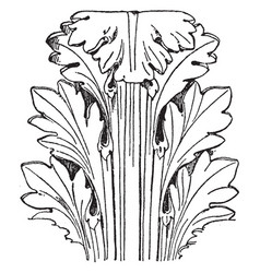 Roman capital leaf has rounder and broader tips vector