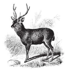 Sambur deer vintage vector