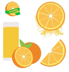 Orange set on white vector image