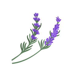 Flat icon of two small sprigs of green vector