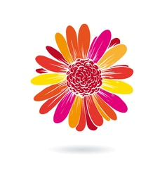 Gerber flower isolated on a white backgrounds vector image