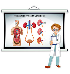 human kidney health conditions infographic with vector image