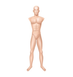 male mannequin manikin for clothing store vector image