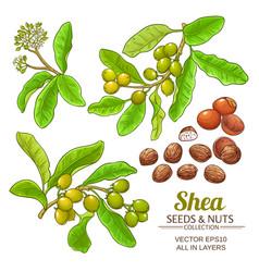 shea set vector image
