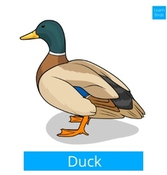 Duck learn birds educational game vector