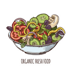 organic fresh food hand drawn greens vector image