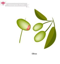 Ripe Olive A Popular Fruit in Georgia vector