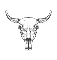Vintage buffalo skull sketch Bull animal vector