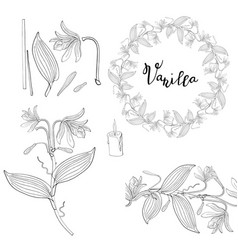 wreath and seamless brush from vanilla orchid vector image