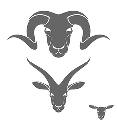 Ram Sheep Goat vector image vector image