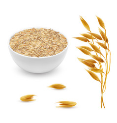 3d realistic oat ears grains bowl vector image