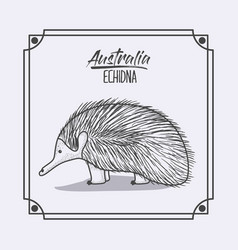 Australia echidna in frame and monochrome vector