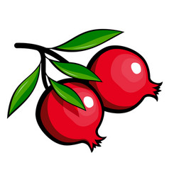Drawn ripe pomegranate fruit vector