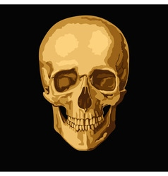Gold skull vector