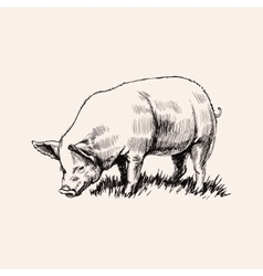 Hand Drawn Sketch Pig vector image