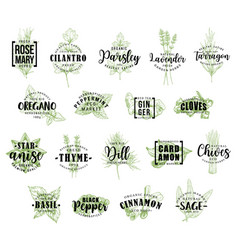 Herb and spice icons with lettering vector