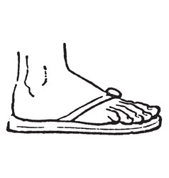 Sandal was usually a sole of hide vintage vector
