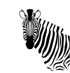 Closeup beautiful portrait zebra vector