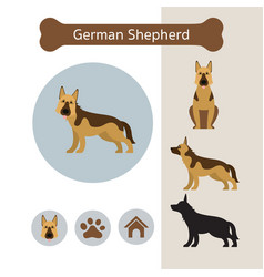 German shepherd dog breed infographic vector