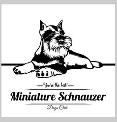 Miniature schnauzer dog - for vector