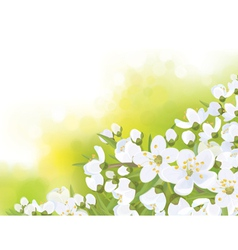 spring tree blossom flowers vector image vector image
