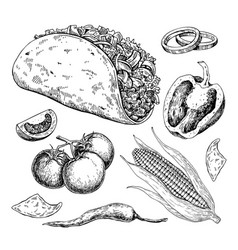 taco drawing with vegetable traditional mexican vector image