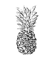 Pibapple sketch vector image vector image