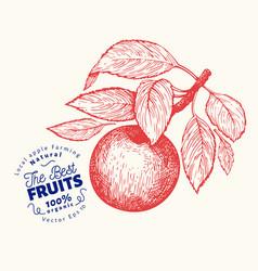 apple branche hand drawn garden fruit engraved vector image