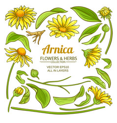arnica elements set vector image