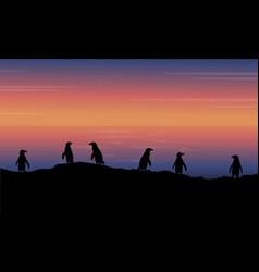 beauty landscape penguin at sunset vector image