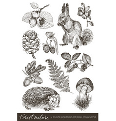 Collection of highly detailed hand drawn berries vector