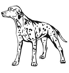 Decorative standing portrait of dog dalmatian vector